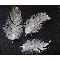 Plumas De Pato X10cm