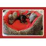 Cama Moises, Perros Y Gatos Pequeños. Lona Y Polar 55x45 Cm