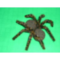 Espectacular Araña Pollito-chasco-chiste-broma