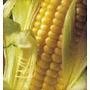 Semillas De Maiz Choclo X2 Elviveruski Huerta Vivero Siembra
