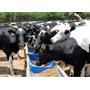 Comederos Para Animales Feedlot Economicos