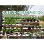 Aprende Hidroponia Cultivos Sembrar Hidroponicos _ar