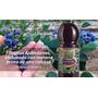 Arándanos - Botella De Jugo X 1,5lts Fitoplus
