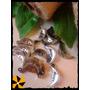 10 Dijes Plásticos Luna Libelula Souvenir Decoracion