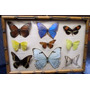 Coleccion Mariposas En Vidrio Bombe En Marco Bambu 22x32 Cm