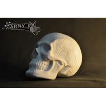 Craneo Escala / Calavera Escultura Tatuaje Esqueleto Figuras