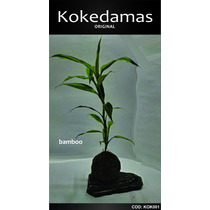Kokedamas Original - Bamboo 1 Vara - Kok Arte Natural