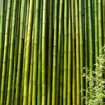 Cañas De Bambu Y Tacuara. Cercos Cielorrasos Pergolas