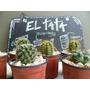 Cactus Medianos Barro Varios Modelos Elegi El Tuyo | Munro