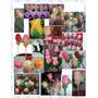 Flores De Cocolate Cumpleaños,casamiento,despedida,souvenirs