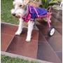 Carritos Para Perros Discapacitados