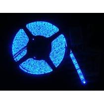 Rollo Tira Led 3528 300 Led 5 Metros 12v Color Azul