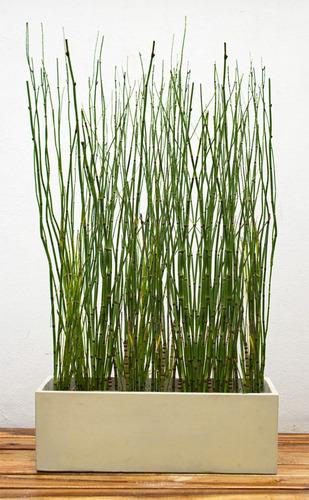 Jardineras Con Bambu. Plantas Naturales Y With Jardineras Con Bambu ...