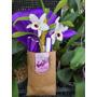 Orquidea Dendrobium Phal. C/flor (sin Envio)(20%desc.efvo)