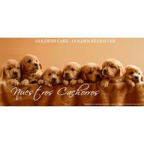 Cachorros Golden Retriever - F.c.a. - Goldens Lake