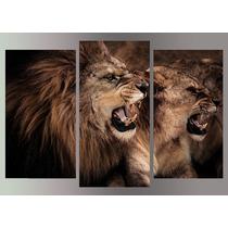 Leon Alimales Felinos 3 Partes Cm En Tela Canvas .exelente!