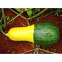 Zapallito Bicolor Brasileirinha Huerta Semillas P/ Plantas
