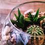 Souvenirs Mini Terrario Suculentas Cactus Ideal Cumple Boda