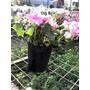 Alegrías Del Hogar Florales Muy Lindas!!!
