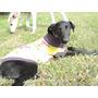 Adopción Cachorra Mix Galgo Leer Condiciones