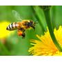 Polen De Flores Y Arboles 200 Grs. 100% Natural
