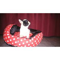 Bulldog Frances Criadero Il Mio Azienda Mascotas Hembra Vaqu