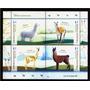 2015 Fauna- Camelidos- Vicuña- Llama- Argentina