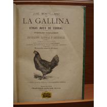 José Montellano.la Gallina Y Otras Aves De Corral. 1901