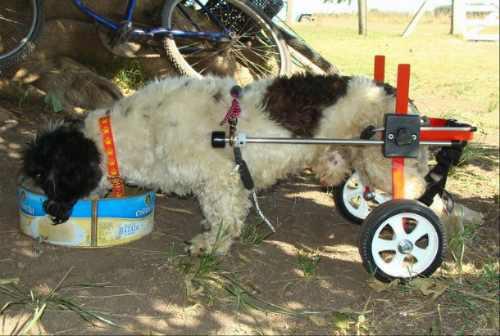 Carrito para perros y gatos petwheels otros a ars 750 en for Carritos para perros
