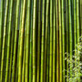 Cañas De Bambu Tacuara 10 Unidades 2.6/4 Cm X 4,10 Mts Largo