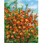 Espectaculares Cytisus Lena: Se Llenan De Flores Naranjas!!!