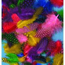 Plumas De Colores De Ginea 25 Plumas De 3 A 8 Cm