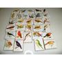 Cajas De Fosforos ,aves Autoctonas