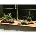 Arreglos Con Plantas Vivas Sobre Troncos Decoración, Regalos