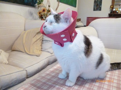 Collar isabelino para perros y gatos blandos nros 3 y 4 for Como hacer un collar para perro