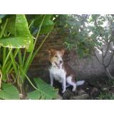 Guarderia Canina La Carola Zona Moron, Ambiente Climatizado.