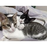 Gatitos Y Gatitas Bebes En Respobsable Adopción. 6 Meses.
