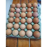 Huevos Para Incubar, Fertiles (ponedaras/ Gallos Puros,cruza