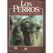 Enciclopedia Canina Perro Afgano Perro De Los Faraones 119