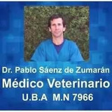 Veterinario Castración Perras , Llegamos Todos Los Barrios