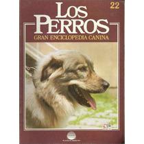 Enciclopedia Canina Perro Pastor Choata Rumano Sirio 22
