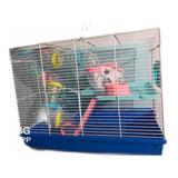 Hamstera Con Casita Y Tubos Hamsters Topitos Con Accesorios