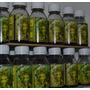 Vita Max - Vitaminas - Fertilizante - 100% Organico