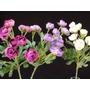 Vara De Ranunculus ( Flores Artificiales)