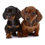 Denuncia Nacimiento Alianza Canina Argentina Internacional
