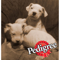 Ultimo Dogo Argentino 12x0 Intereses - Powered By Pedigree