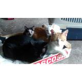 Donación - Adopciones Felinas Florencio Varela X 300