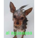 Peluqueria Canina,baños Caninos,corte De Razas Canino,baños