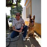 Adiestrador Canino Profesional - 28 Años De Experiencia