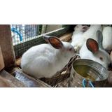 Conejos Gazapos Hibridos Neo- Cali Villa Elisa, La Plata